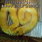 """2013年は巳年で""""蛇イベント""""受付中〜 新春開催から引き継ぎ式まで!!"""