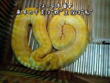 01_20121023182321.jpg