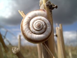 34453_snail_on_the_corn.jpg