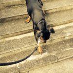 階段 イソ
