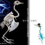 骨格標本 透明標本
