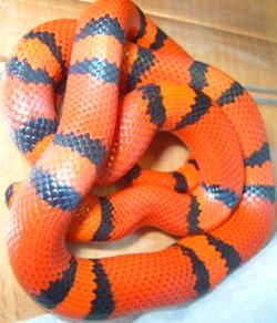 tangerine01.jpg
