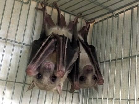哺乳類で唯一空を飛べる動物は?