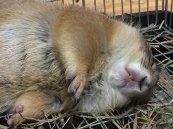 可愛い寝顔!?