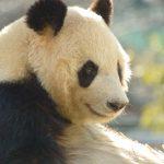 上野のパンダだけが報道されるホントの理由
