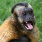 動物の権利「サルの自撮り」著作権訴訟